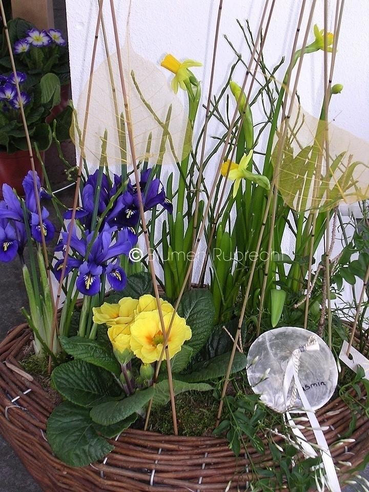 Der Garten Im Februar tipps für den monat februar