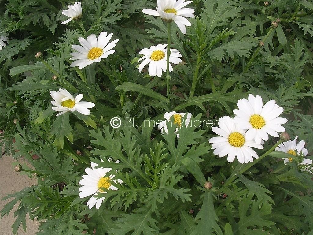 Unglaublich Blumen Mai Dekoration Von Gartentipps 2018