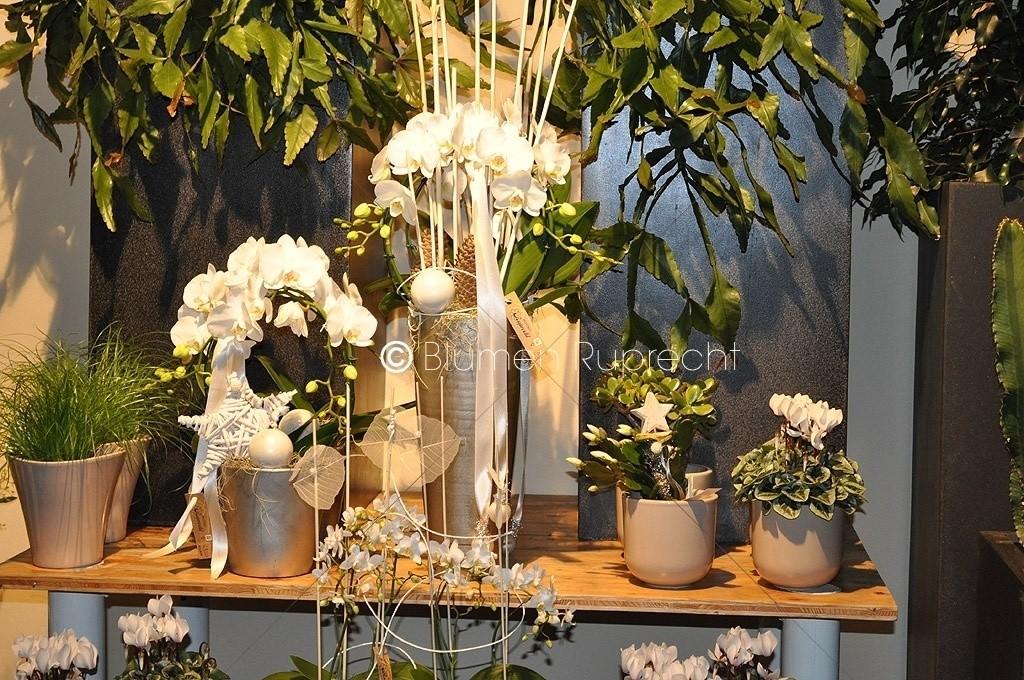 blumen im winter blumen ruprecht gleisdorf. Black Bedroom Furniture Sets. Home Design Ideas