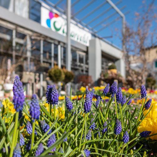"""""""Tag der offenen Gärtnerei"""" Blumen Ruprecht"""